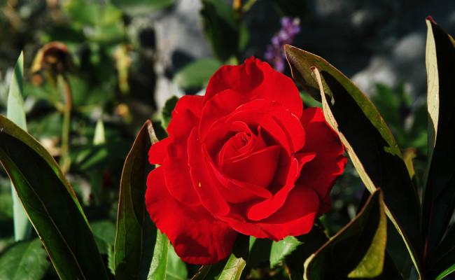 Gartenanlage_BLUMEN_5