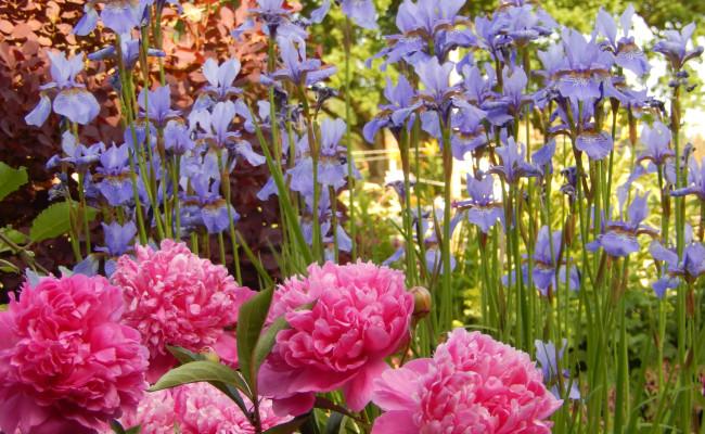 Gartenanlage_BLUMEN_8