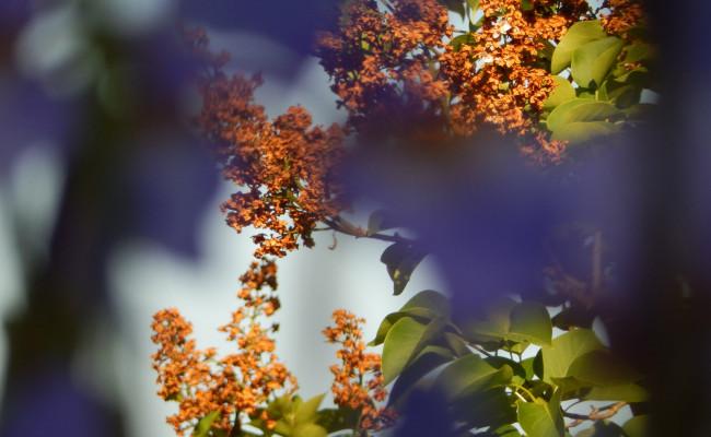 Gartenanlage_BLUMEN_9